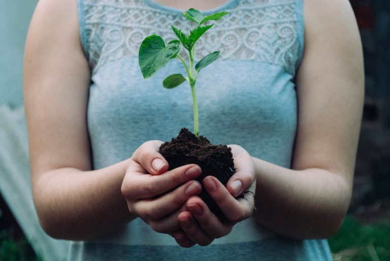 plant a tree . 15 ways to treduce carbon footprint