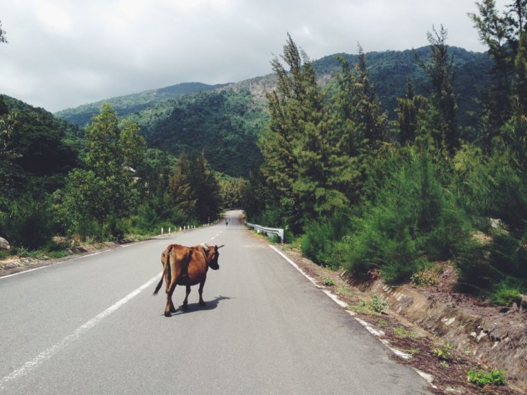 eat less meat - cow on the road - happy cow - 15 ways to reduce carbon footprint